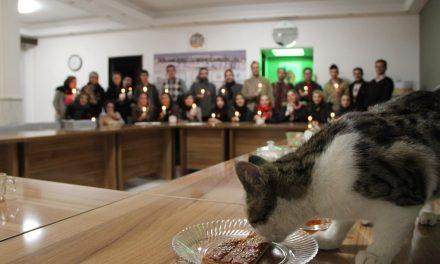 نشست فعالان حامی حیوانات تبریز به مناسبت روز جهانی حقوق حیوانات
